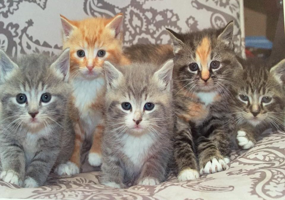 Cute Kittens Need Your Help