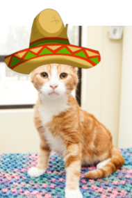 cat wearing sombrero